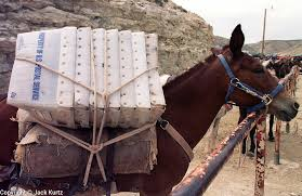 Mule Delivering Mail